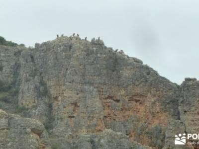 Piragüismo Hoces del Río Duratón,canoas; senderismo por soria sierra de guadarrama rutas